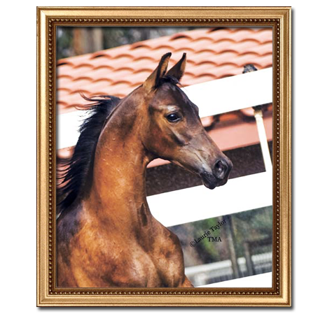 HA Toskcano (HA Toskcan Sun x Allusive Lady by Allience)